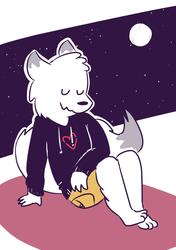 an arctic fox (2)