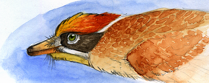 Firecrown Pararaptor