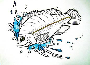 Splashy Sunfish