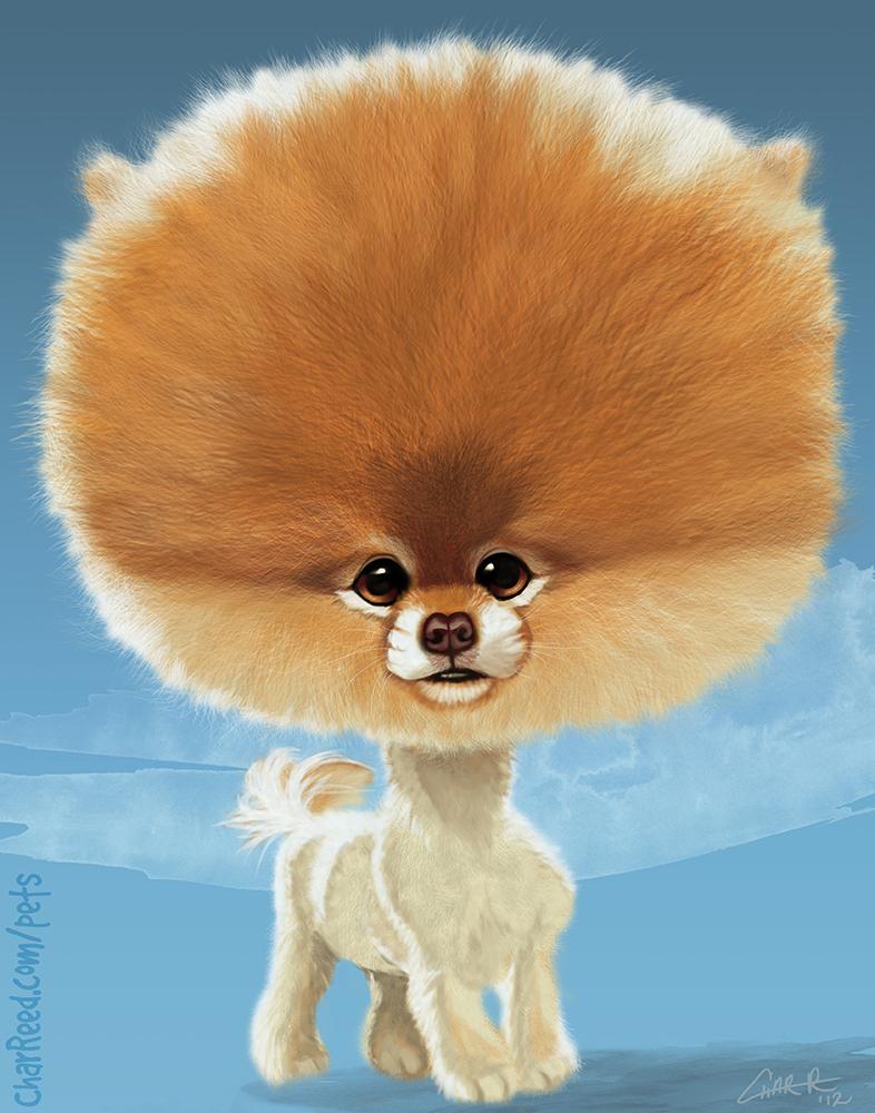 Boo! The World's Cutest Dog