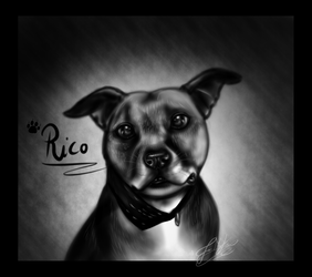 Pet Commission: Rico the Staffy