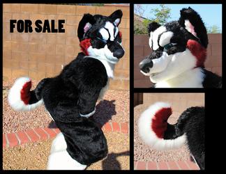 Valentine Husky Head for Sale