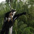 Video: Dragon Flight - Fursuit Zip-Lining