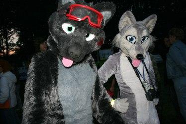 Wolves on festival