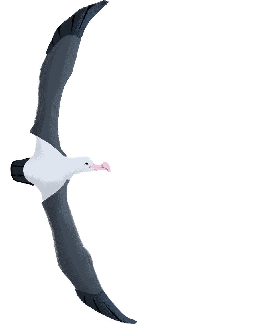 Day 83: Wandering Albatross