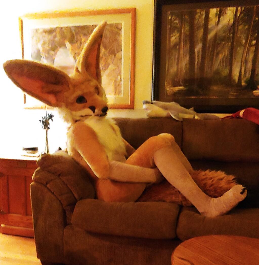 Cute Fennek Fox