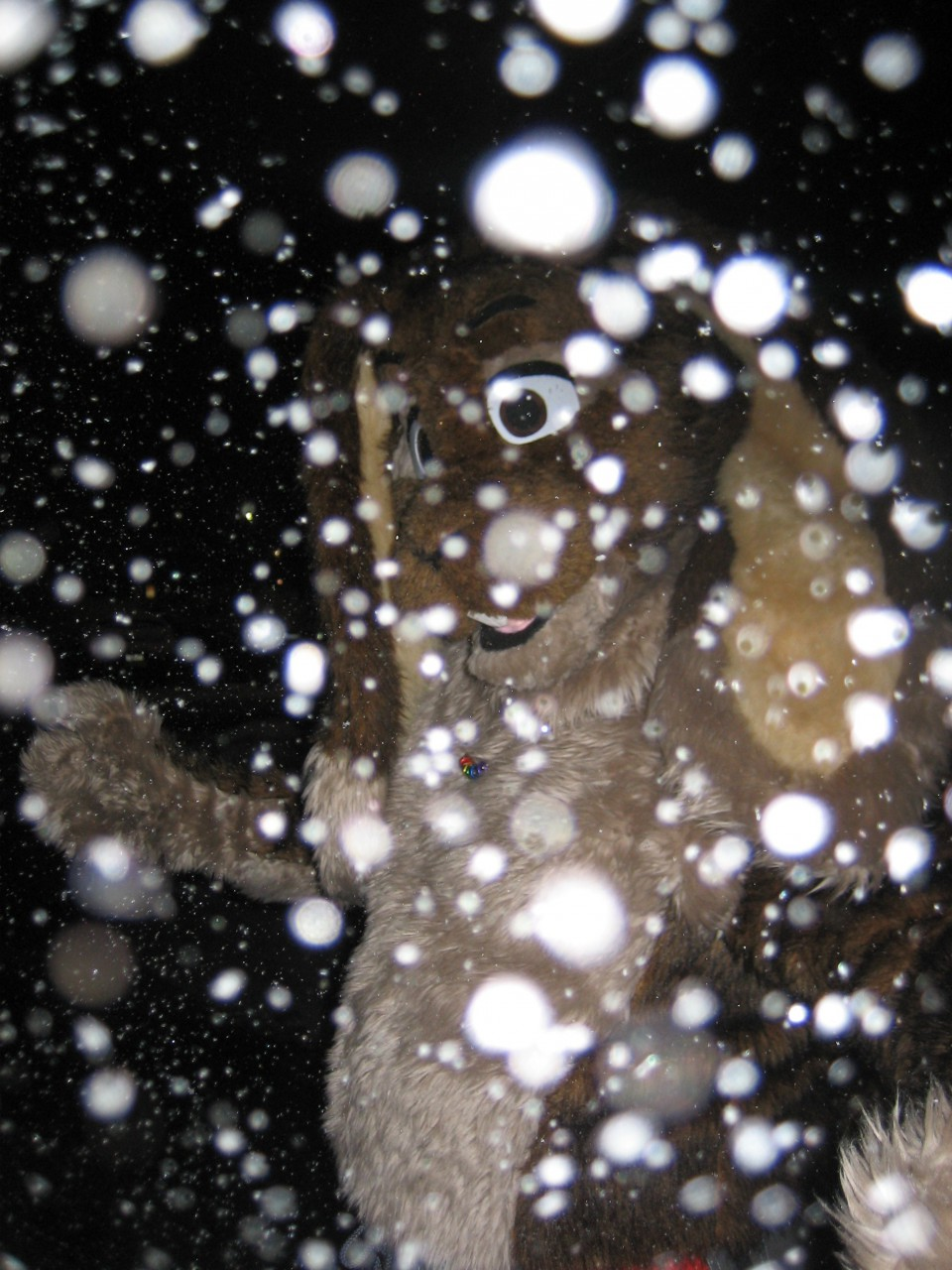 Bunny in the snow! (NYE '07)