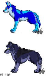 The Blue Coyote VS. Chinterton