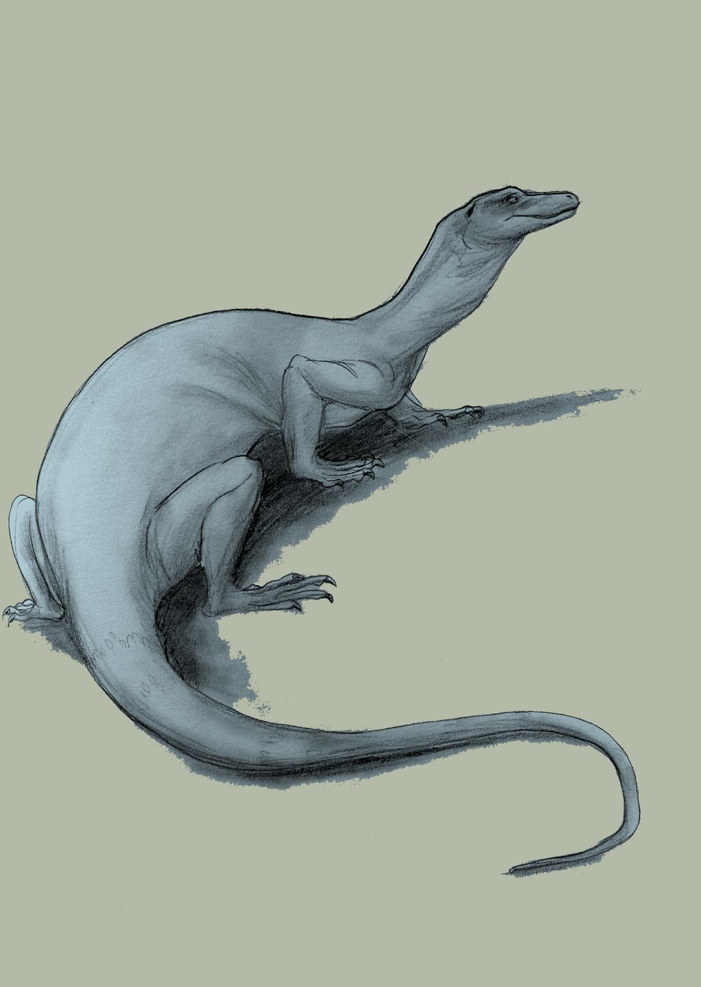 A Big Lizardo Sketch