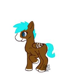 Mocha Pony Adopt!