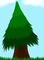 Sketch This: Pine Tree
