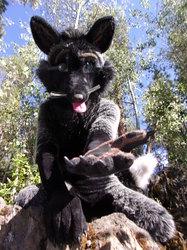 Silver Fox lending a paw.