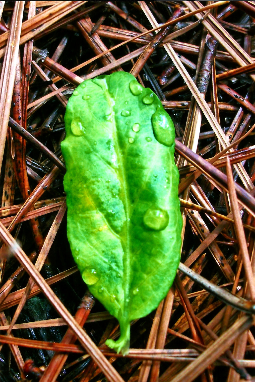 Like Water Off a Leaf's Back