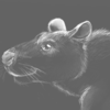 avatar of blondehusky