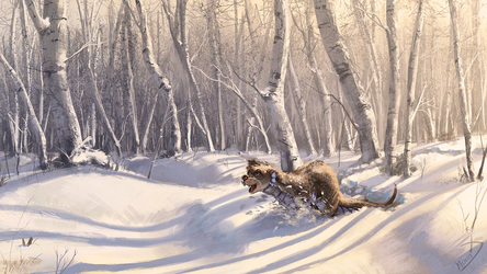 What do otters do when they see untouched snow?