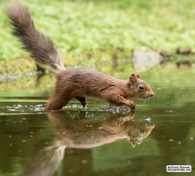 Wet foot forward