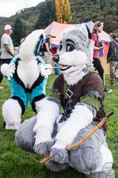 Ironfest 2017: Husky Photobomber