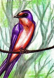 ACEO Christmas Gift--Sassy Swallow!