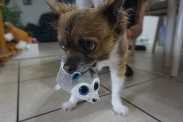 my dog with a new toy