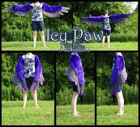 Purple/grey wings