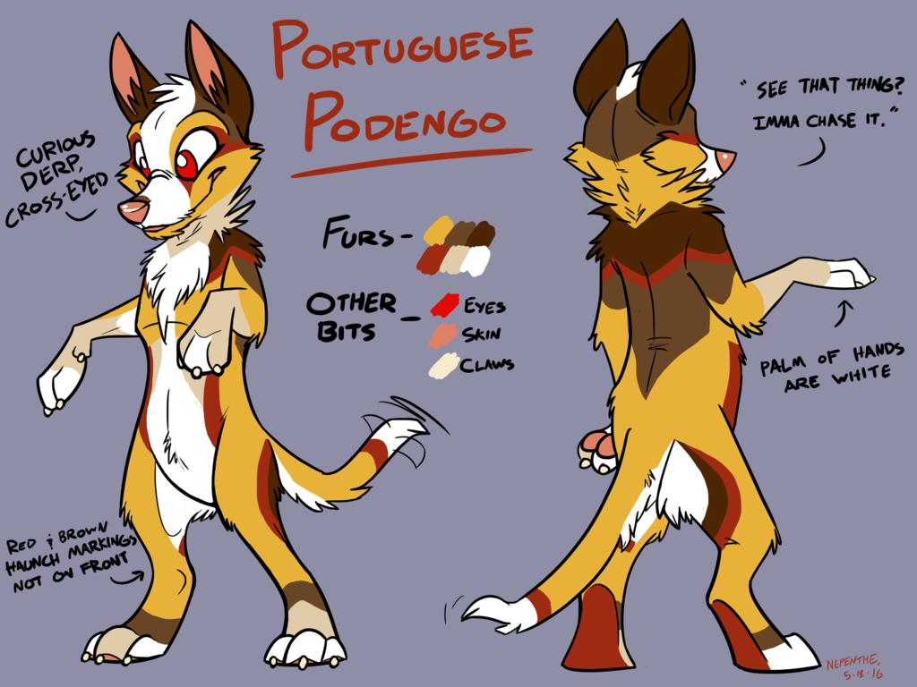 Most recent image: Portuguese Podengo