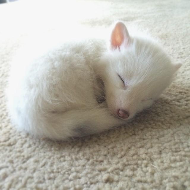 Most recent image: Nightcore - White Foxes (Susanne Sundfor)