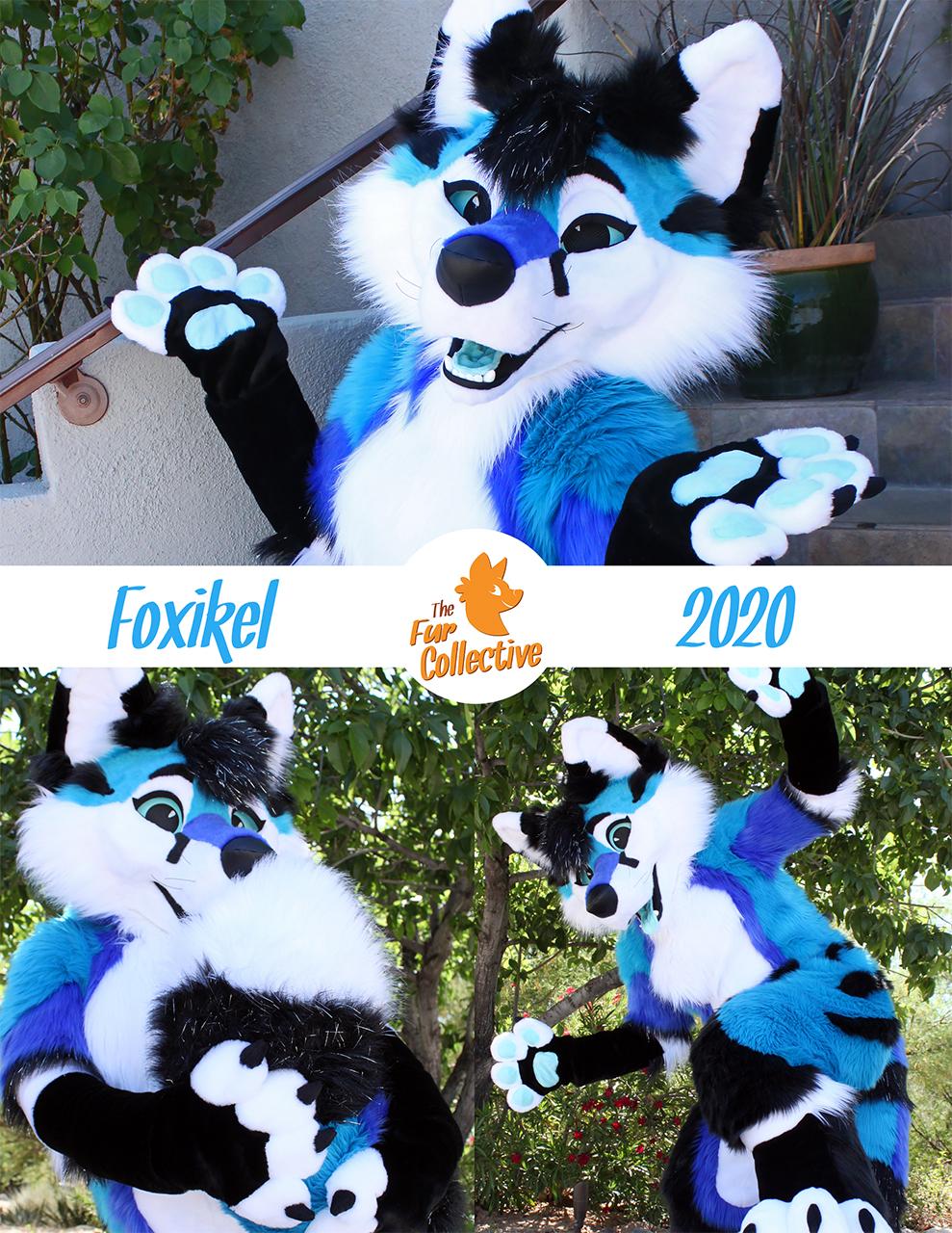 Foxikel the Fox Jackal!
