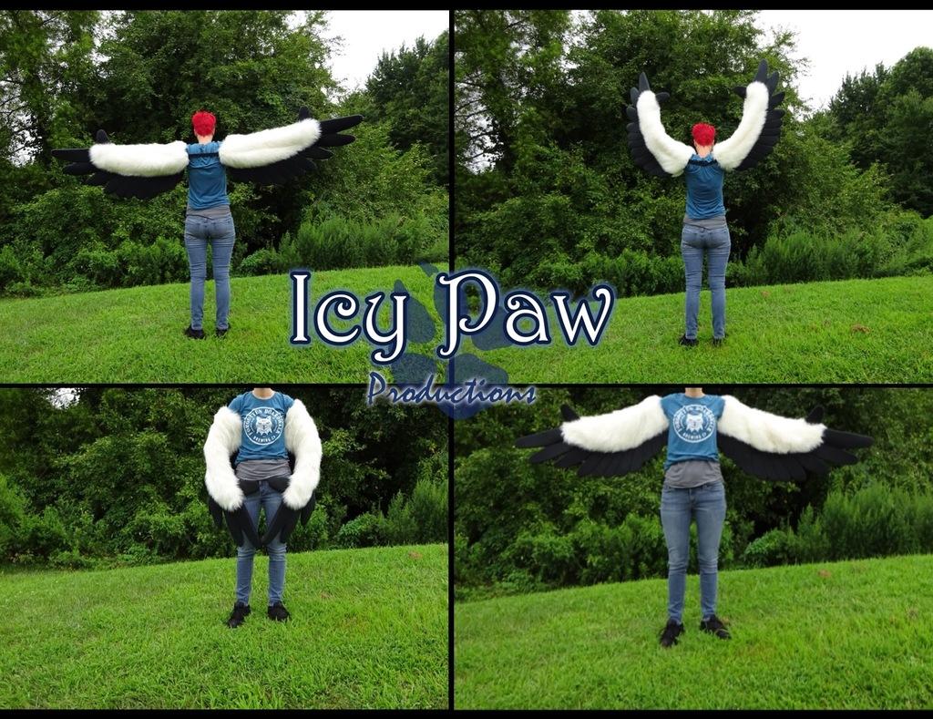 Ivory/black wings