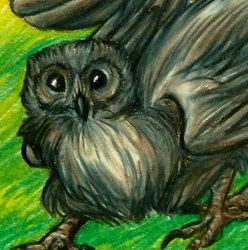 ACEO--Barred Owl-Gryphon