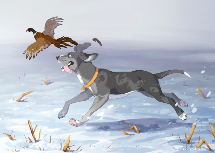 Most recent image: Pheasant Chasing - comm