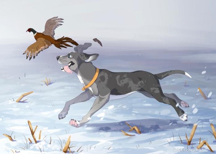 Pheasant Chasing - comm