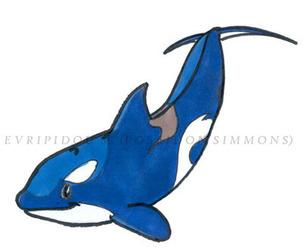 cartoonish orca