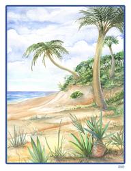 Gift: The Beach