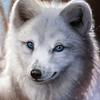 avatar of KitsuneKid