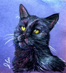 Midget's Portrait