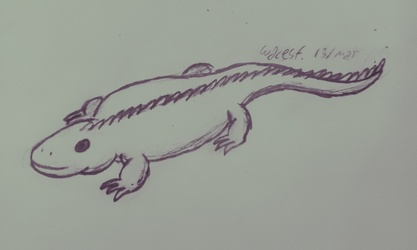 One lizard