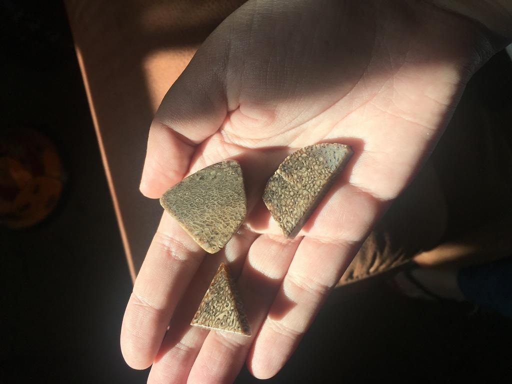 Petrified Whale Bone Pieces