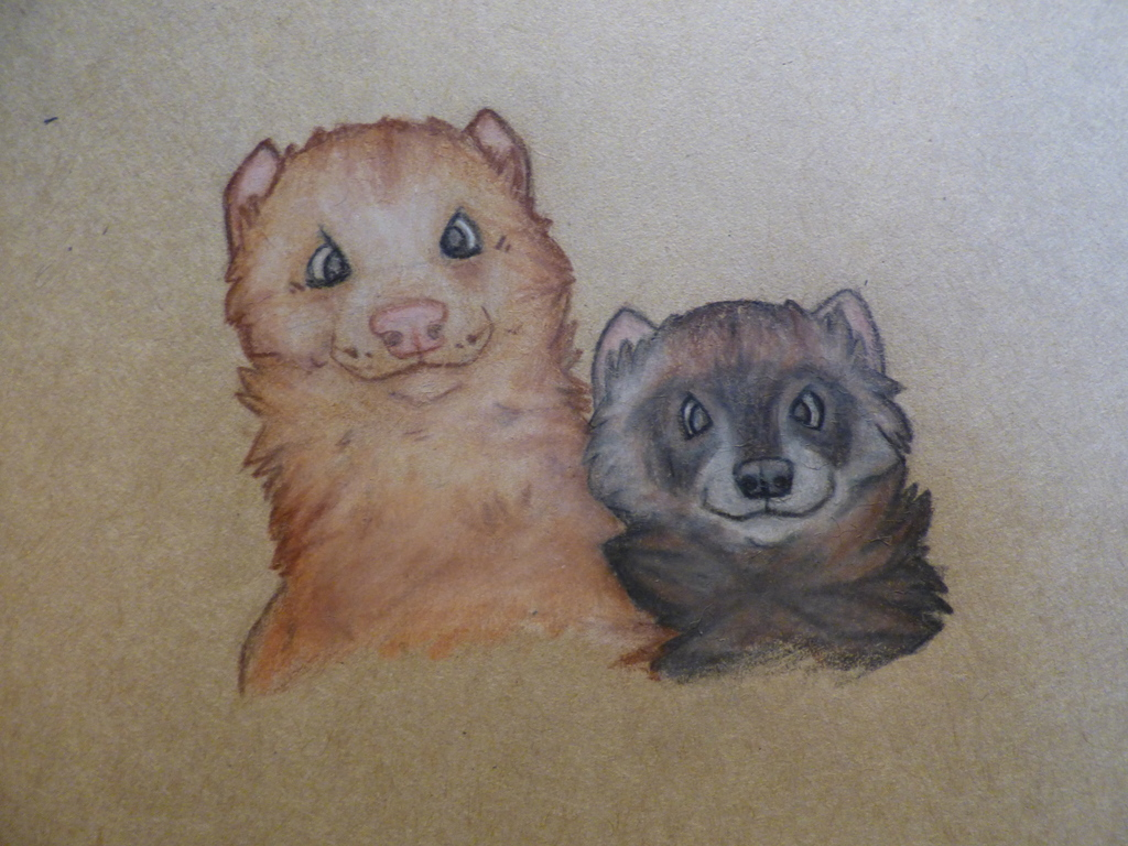 Two ferrets (old)