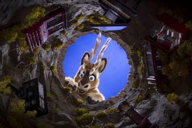 CFz 2015 : Prancer looking down the rabbit hole