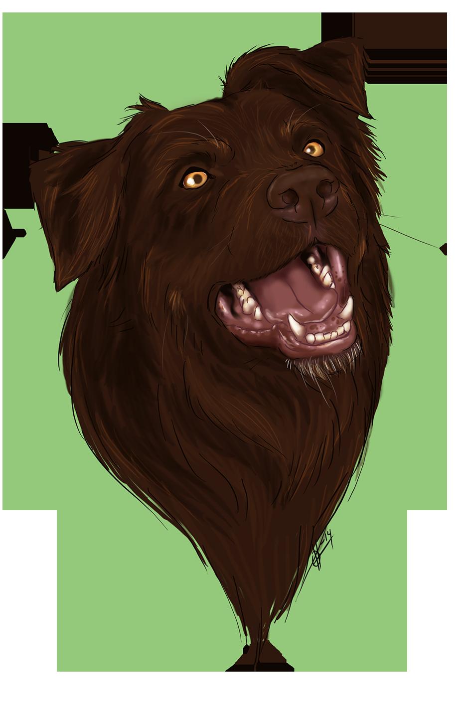 Loki the doge