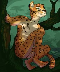 Jaguar Dude