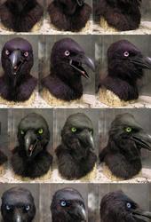 rainbow ravens!