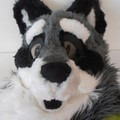 A raccoon makeover - Quincy got new eyes!
