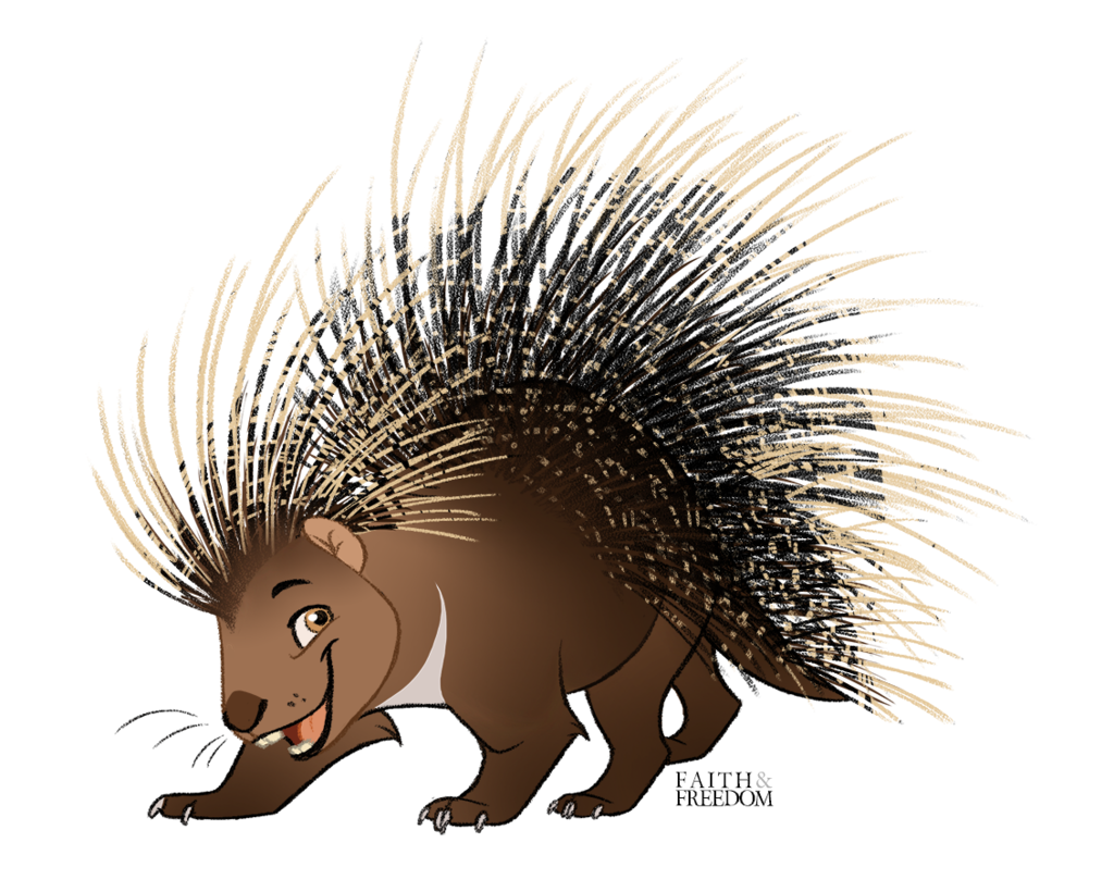 Most recent image: Crested Porcupine