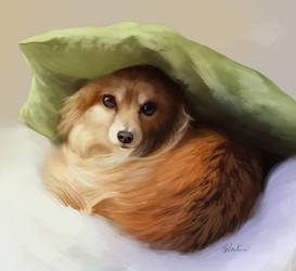 Pillow hat :> [OLD]