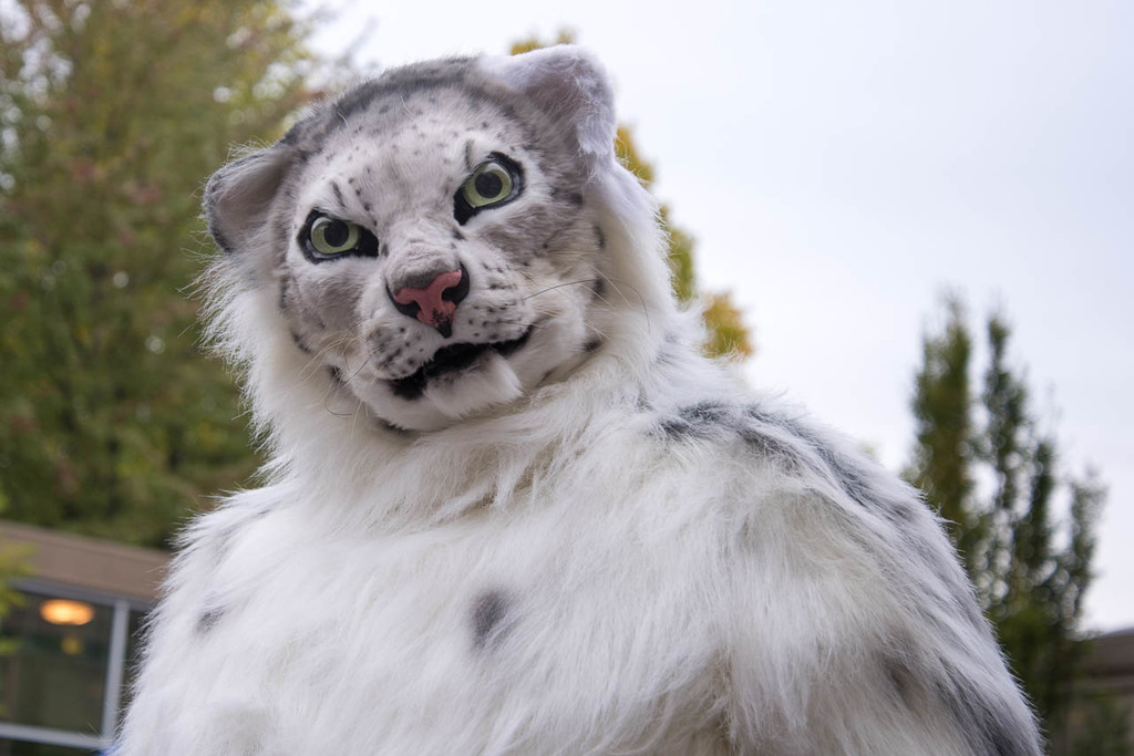 Most recent image: SO I GUESS I'M A SNEP NOW