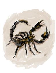 Scorpion Paint Sketch