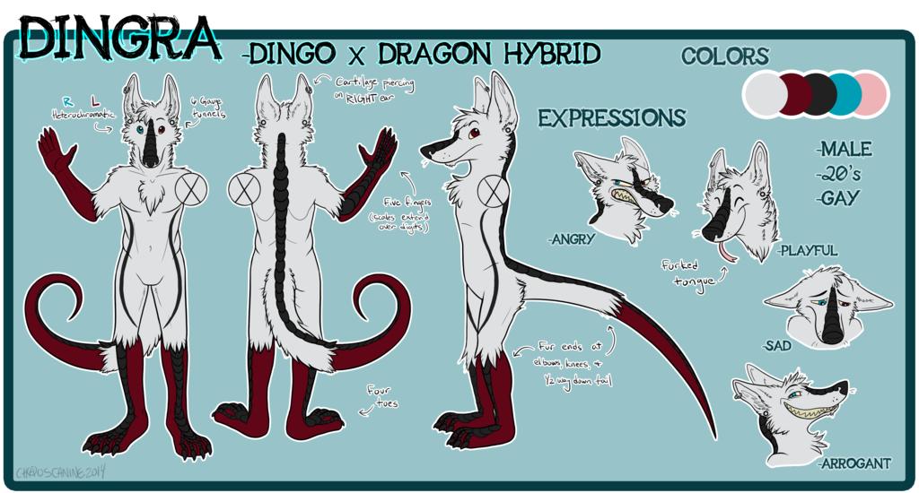 Dingra DingoDragon Reference Sheet [Commission]