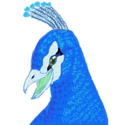 Peacock practice