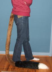 Jerboa Tail